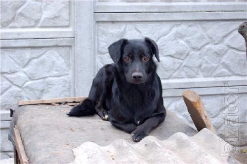 The scout-labradorite, black beauty!!!