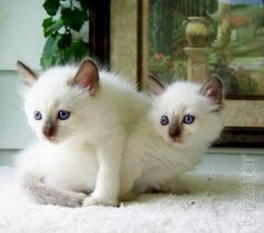 declawed cat litter box problems