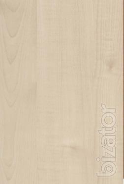 Maple (MB 519-20)