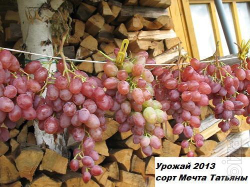 Seedlings 2 Years Best 90 Dessert Grape Varieties With
