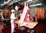 Line of slaughter and processing of pigs