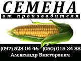 Sell seed corn. P. S. The Manufacturer. Poltava region