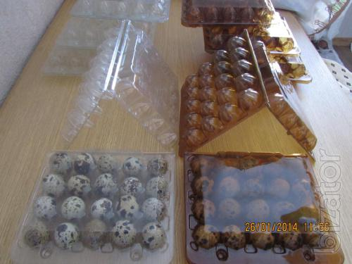 Sale: packages for quail eggs price 0,86 USD.(darkened) and 0.96 USD.(transparent) for PCs packaging from the manufacturer of pet plastic, high-quality