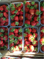 Pineda for strawberries