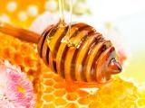 Buy honey, both small and large wholesale.