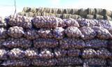 Potatoes in bulk from farms