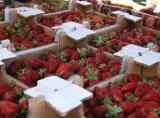 Trays of strawberry, cherry, containers for strawberries, blackberries