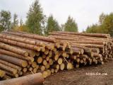 Forest pine Lumber edged boards, not edged timber beam rafters, the lath lag etc in stock and for the order delivery