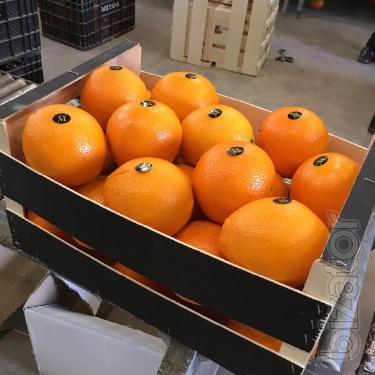 Sell oranges from Spain