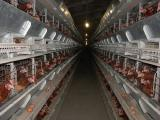 Cage equipment for laying hens