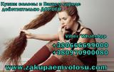 Buy hair expensive in Kiev. Where to sell hair in Kiev. To buy hair in Kiev