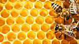 Motley grass honey