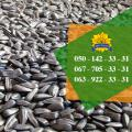 Quality sunflower seeds from the manufacturer