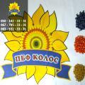 Sunflower seeds Record (under Granstar) from PBF Kolos