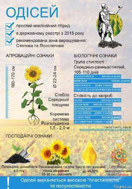 sunflower seeds - Odyssey