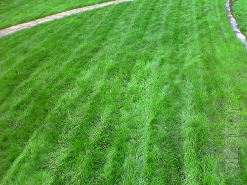 Lawn grass Sports