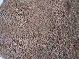 Milk Thistle, flax, radish oil, pumpkin seeds