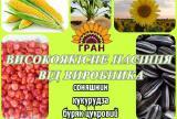 Sunflower seeds under Granstar, Euro-lightning, Classic hybrids from the manufacturer
