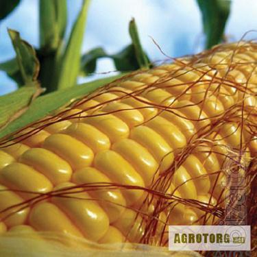 Corn EXT 6763