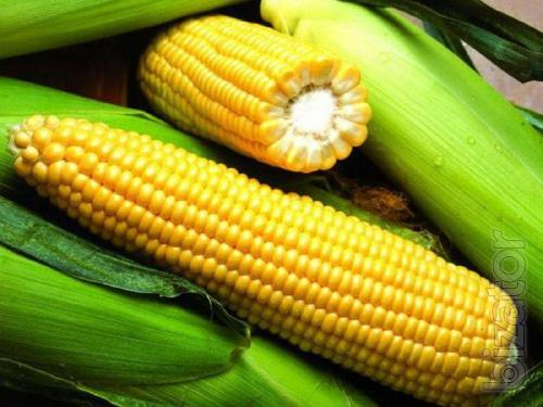 Corn seeds Janis