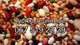 Buy legumes in bulk