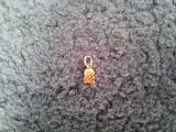 Sell gold pendant-Leo (b/a)