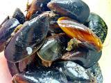 Live black sea mussels Dnepr