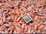 Sale black shrimp