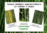 Seeds of hardy bamboo 3 types