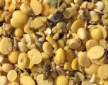 Buy soybean halves substandard