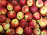 Sell Apples at a good affordable price