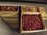 Luggage storage fruit
