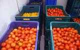 Storage of tomatoes (tomatoes)
