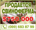 Will sell the current pig farm 2700 sq. m. with.