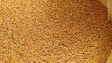 Sell yellow millet-90T.,red-50t.,the harvest of 2019.