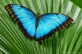 Selling Live tropical butterflies from Africa more than 30 Species