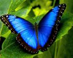 Selling Live tropical butterflies from South America more than 30 kinds of