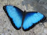 Selling Live tropical butterflies from Kenya more than 30 kinds of