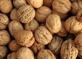 Buy walnut. Nuts wholesale to sell.