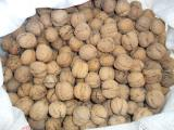 Sell walnuts from my garden - more than 100 kg.
