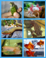 Shop goldfish offers akvariumnyh friends! Order today!