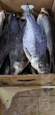 Рыбоперерабатывающая компания реализует вяленую и копченую речную рыбу в ассортименте. Рыба с документами.