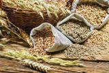 Purchase grains and oilseeds