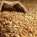 Buy barley in bulk, ex works.