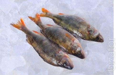 Buy fish wholesale. Selling river fish.