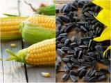 Sell seeds of corn and sunflower seeds at competitive prices