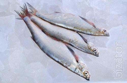Fresh river fish wholesale