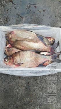 Selling fresh fish wholesale
