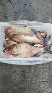 Fresh fish. Bream, roach, perch, bream, perch etc.