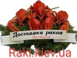 Buy Crawfish live wholesale